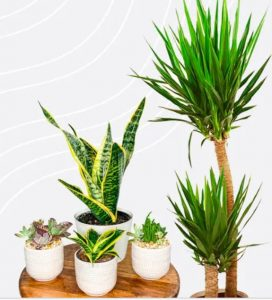 Plantboxs medium mixed plant subscription box for beginners